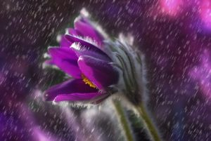système d'arrosage réglé en brumisateur pour l'arrosage des fleurs