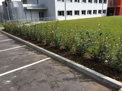 haie-arbustes